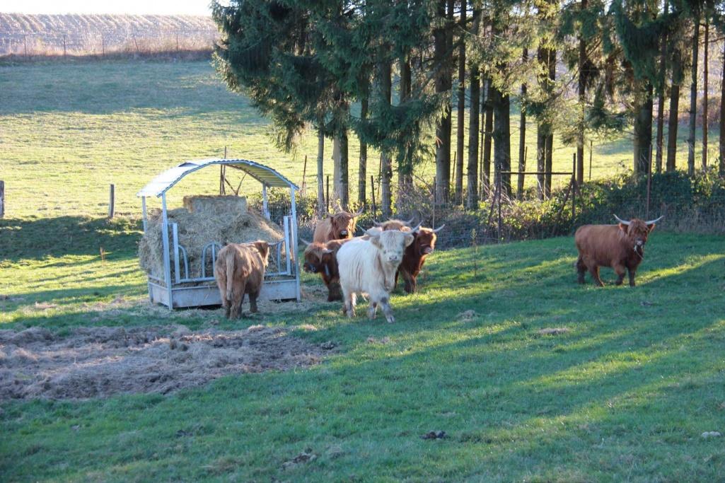 hce exportiert 7 f rsen nach belgien hce highland cattle eschweiler luxembourg. Black Bedroom Furniture Sets. Home Design Ideas